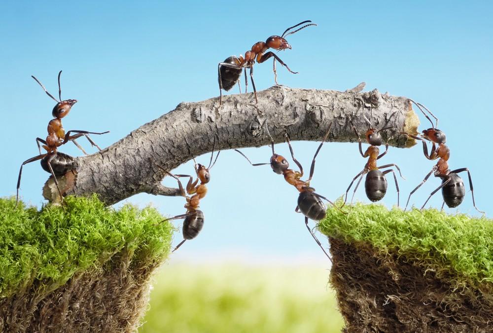 Team Building: quando la squadra fa la differenza (e non il gruppo)