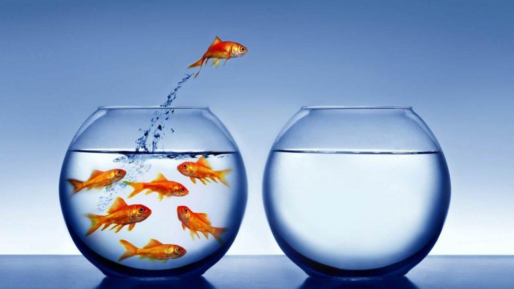 Nel tuo business ragioni per uguaglianza o ragioni per differenza?